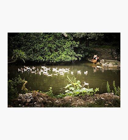 Duck Farmer Photographic Print