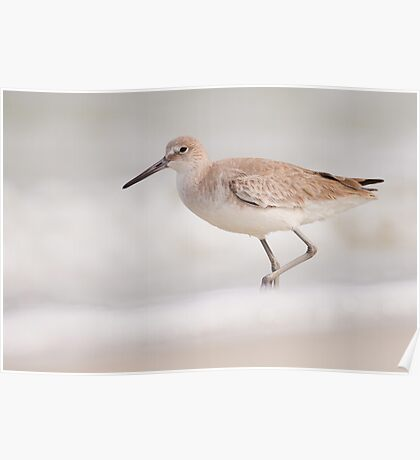 Willet in the Snow Poster