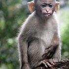 Monkey Poke by ApeArt