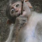 Monkey Twig by ApeArt