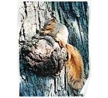 Baby squirrel Poster