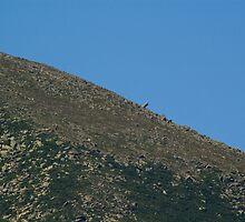 Mt. Katahdin- Moon like by Alana Ranney