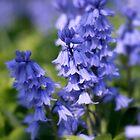 Blue Spring  by Nugrahini Tj.