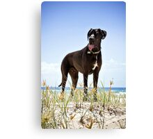 Zephyr the Great Dane Canvas Print