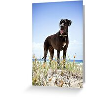 Zephyr the Great Dane Greeting Card