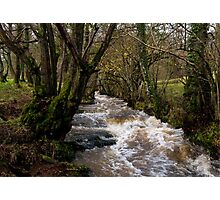 Swollen November Stream in Herefordshire Photographic Print