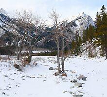 Winterland by zumi