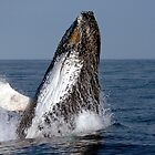 Humpback Breaching by DebYoung