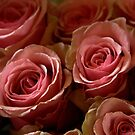 Pink Roses by photoloi