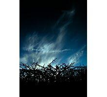 Blackthorn Photographic Print