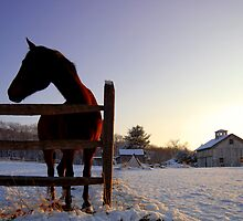 Cold Morning, Connecticut, USA by Sabine Jacobs