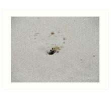 Sand crab Art Print