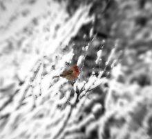Winter Bird by doorfrontphotos
