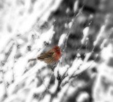 Winter Bird Sticker