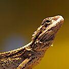 Lizard by gillyisme53