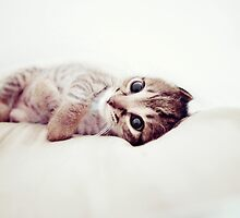 Cuddle by aelyn