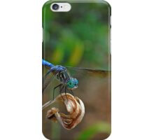 Blue Suede Dragon iPhone Case/Skin
