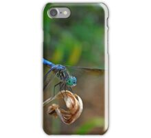 Blue Suede Dragon iPhone Case/Skin