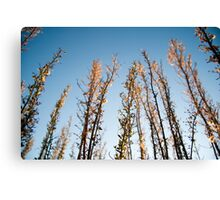 You're All I Need, Lyin' In the Reeds Canvas Print