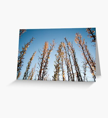 You're All I Need, Lyin' In the Reeds Greeting Card