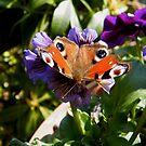 Orange on Purple by ElsT
