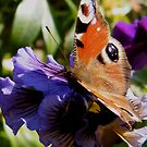 Butterfly on Pansy by ElsT