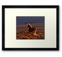Blazing Stallion Framed Print