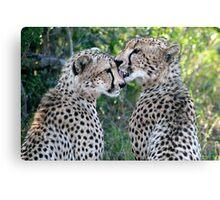 Cheetah Brothers Canvas Print