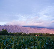 Southwest Mountain Corn by doorfrontphotos