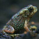 Teeny Weeny Toad by James  Birkbeck Animals