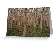 Boranup Forest - Karri Trees Greeting Card