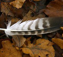Feathers Point the Way by SerafinaJayne