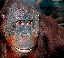 Amber Ape by doorfrontphotos