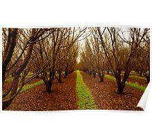 Donnybrook Apple Orchards Poster