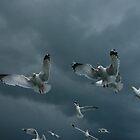Feeding the Seagulls by Scott  Andrew