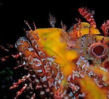 Scorpionfish staring contest by Aziz T. Saltik