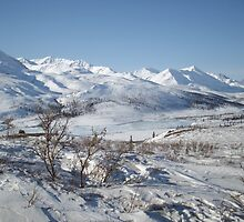 Creeping Ice - Dempster Highway, Yukon, Canada 2008 by Dan & Emma Monceaux