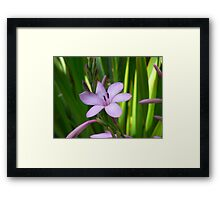 Flower  early morning Framed Print