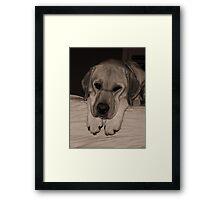 Loney Pup Framed Print