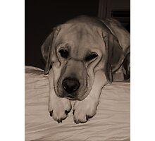 Loney Pup Photographic Print
