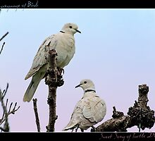 Sweet Song of Turtle Doves by TomRaven