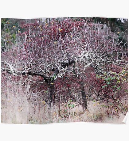 speaking trees  Poster