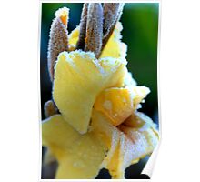 Frosted Gladiola Poster
