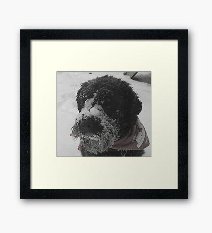 All I Want For Christmas.... Framed Print