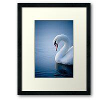 Early Morning Swan Framed Print