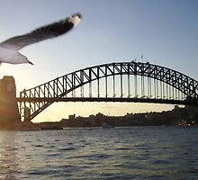 Sydney Bridge Seagull by LonePilgrim