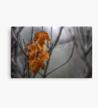 Nature's Gold Canvas Print