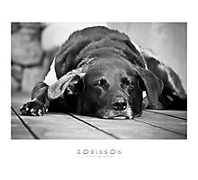 Tired Dog Photographic Print