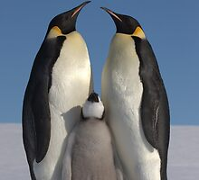 Emperor Penguins 1 - Merry Christmas Card by Steve Bulford