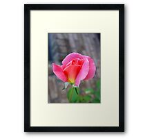 Rosebud and Diamonds Framed Print